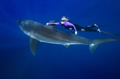 £££ The woman who swims with sharks-1743579.jpg