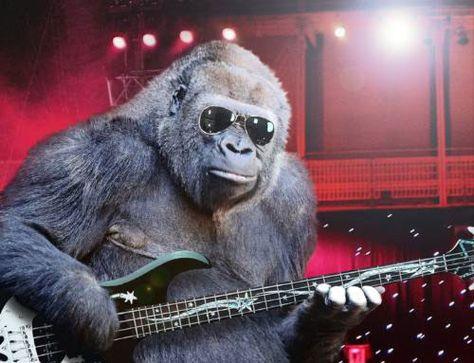 1d74e28708868f708b125243f53968c7--musical-instruments-funny-animal.jpg