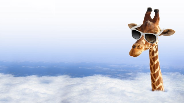 giraffe with sunglasses [640x480].jpg
