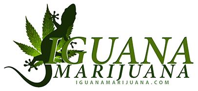 IGUANAMARIJUANA4.png